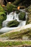 Córrego da floresta Imagens de Stock Royalty Free