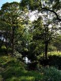 Córrego da floresta Imagem de Stock Royalty Free