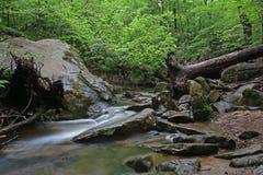 Córrego da floresta através dos pedregulhos Foto de Stock Royalty Free