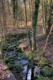 Córrego da floresta da cidade de Francoforte fotos de stock