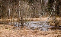 Córrego da floresta da paisagem Fotografia de Stock