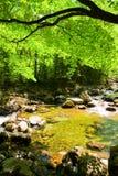 Córrego da floresta da queda no primorye russian Imagens de Stock Royalty Free