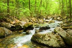 Córrego da floresta da queda no primorye russian Imagem de Stock Royalty Free
