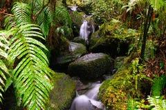 Córrego da floresta húmida Fotos de Stock
