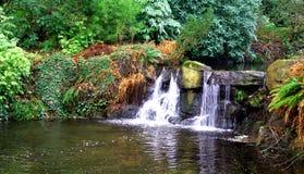 Córrego da floresta húmida Fotografia de Stock Royalty Free