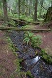 Córrego da floresta húmida Fotografia de Stock