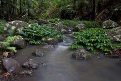 Córrego da floresta húmida fotos de stock royalty free