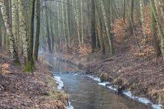 Córrego da floresta na manhã nevoenta do outono fotografia de stock royalty free