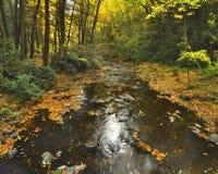 Córrego da floresta no outono imagem de stock royalty free