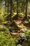 Córrego da floresta no verão Imagem de Stock