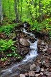 Córrego da floresta que corre através de rochas e de árvores Imagem de Stock