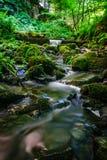 Córrego da floresta que corre sobre rochas musgosos Foto de Stock Royalty Free