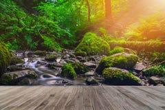 Córrego da floresta que corre sobre rochas musgosos com passagem de madeira Fotografia de Stock