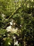 Córrego da floresta tropical Fotos de Stock