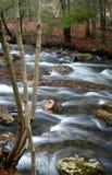 Córrego da mola Imagens de Stock