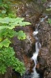 Córrego da montanha Foto de Stock Royalty Free