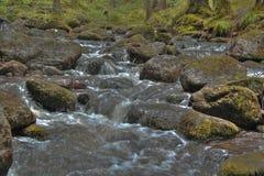 Córrego da montanha Foto de Stock