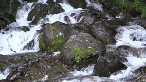 Córrego da montanha vídeos de arquivo