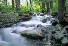 Córrego da montanha Imagem de Stock Royalty Free