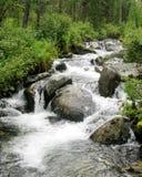Córrego da montanha através das árvores Imagem de Stock