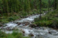 Córrego da montanha através das árvores Foto de Stock
