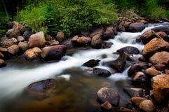Córrego da montanha com Foilage verde Imagens de Stock Royalty Free