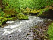 Córrego da montanha com os pedregulhos grandes abaixo das árvores verdes frescas O nível de água faz reflexões verdes O fim do ve Fotografia de Stock Royalty Free