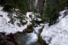 Córrego da montanha com snowbanks, árvores imagens de stock