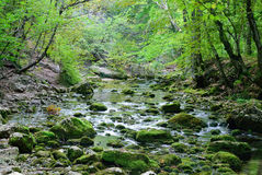 Córrego da montanha crimeia Foto de Stock