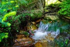Córrego da montanha da floresta Imagem de Stock Royalty Free