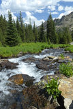 Córrego da montanha em montanhas rochosas de Colorado Fotos de Stock Royalty Free