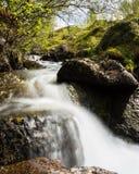 Córrego da montanha em Noruega Imagem de Stock