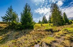 Córrego da montanha entre a floresta no prado Foto de Stock