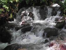 Córrego da montanha na floresta fotografia de stock royalty free