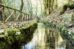 Córrego da montanha na floresta Fotos de Stock Royalty Free