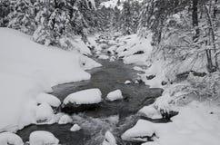Córrego da montanha na floresta do inverno Imagem de Stock Royalty Free