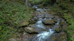 Córrego da montanha na manhã do outono vídeos de arquivo
