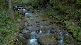 Córrego da montanha na manhã do outono video estoque