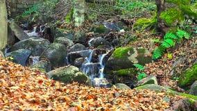 Córrego da montanha profundamente em Forest In Autumn filme