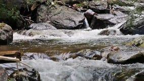 Córrego da montanha que corre através dos pedregulhos video estoque