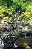 Córrego da montanha que flui sobre as pedras musgosos em uma floresta Rosa Khutor Alpine Resort do verão Estosadok, Sochi, Rússia fotografia de stock
