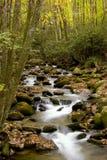 Córrego da queda Fotos de Stock