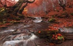 Córrego da queda: Grande cor vermelha de Autumn Beech Forest Landscape In com angra e Misty Grey Forest Enchanted Autum bonitas d fotos de stock royalty free