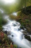 Córrego da selva em uma manhã nevoenta Foto de Stock