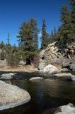 Córrego da truta da montanha Foto de Stock Royalty Free
