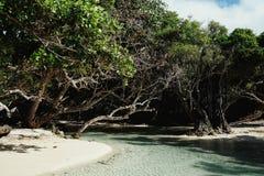 córrego de água doce que encontra o mar no paraíso tropical fotos de stock