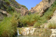 Córrego de David fotos de stock royalty free