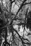 Córrego de fluxo Imagem de Stock