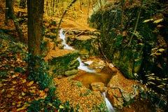 Córrego de fluxo do outono imagens de stock royalty free