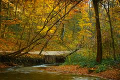Córrego de fluxo do outono foto de stock